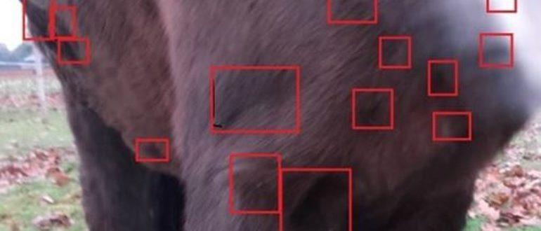 25248.jpg